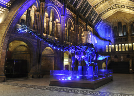 Light-up-Dippy--Natural-History-Museum1